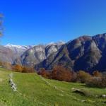 Rast auf der Alp
