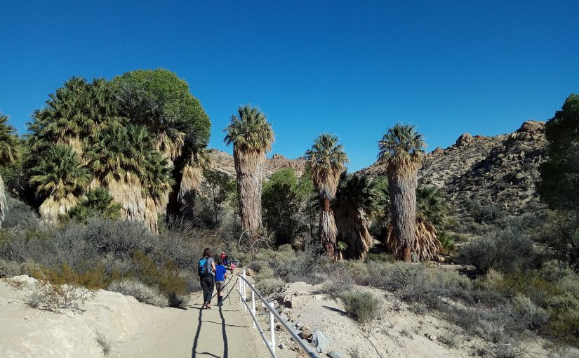 Roadtrip Tag 3 – Mojave